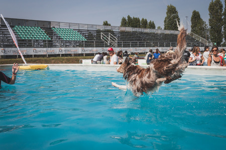 MILAN, ITALY - JUNE 7  Dog enjoys the swimming pool at Quattrozampeinfiera, event and activities dedicated to dogs, cats and their owner on JUNE 7, 2014 in Milan