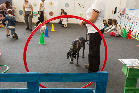 shape cub: MILAN, ITALY - JUNE 12: Cute dog at Quattrozampeinfiera, event and activities dedicated to dogs, cats and their owners on JUNE 12, 2016 in Milan. Editorial