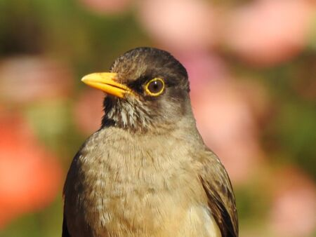 Close up picture of a bird