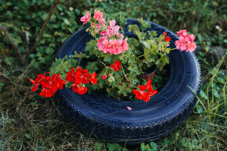 red and pink garden flowers inside a tire