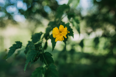 yellow blossom plant with green background