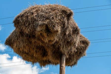 Social weaver nest on a telephone pole