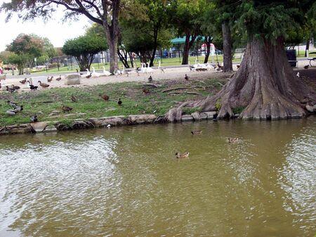 flocking: Flocking together Stock Photo