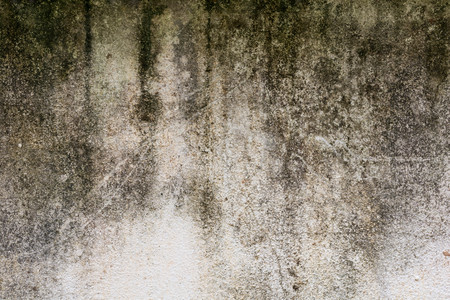 mouldy: Mildewed walls