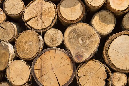 Neatly Stacked logs Stockfoto