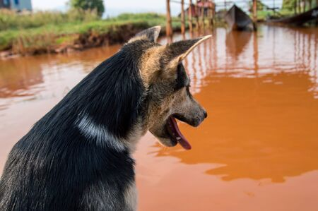 Puppy checking out the muddy river in Myanmar Stock Photo