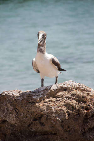 Caribbean Bird on a rock