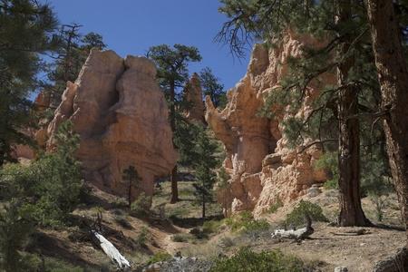 hoodoo: The Hoodoo rock, Bryce Canyon National Park, Utah, USA