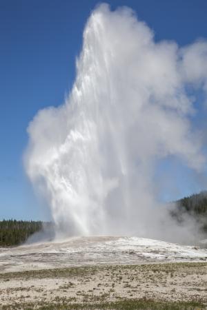 The Old Faithful erupting, Yellowstone National Park, Wyoming, USA