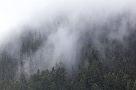 Trees and Fog in Mount Rainier National Park, Washington State, USA Stock Photo