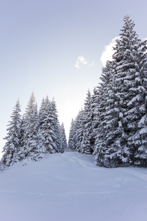 seasonally: Panorama of a winter landscape with snow covered trees at a ski area, Westendorf - Brixen, Austria Stock Photo
