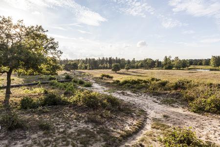 heathland: Path leading through dutch heathland Stock Photo