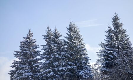 Snow covered trees with blue sky Stock Photo