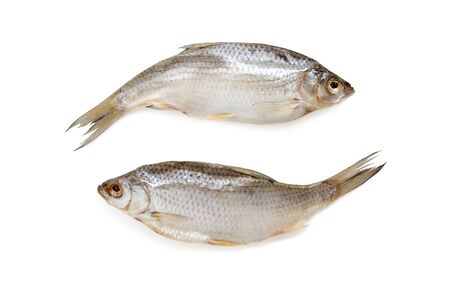 ying and yang symbol. jesting image. stockfish isolated on white background