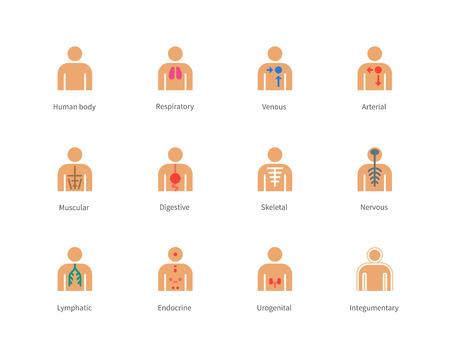 Pictogram collectie van het menselijk lichaam en de anatomie met lymfatische, integumentary, urogenitale, endocriene, ademhaling, zenuwstelsel, skelet, spieren, spijsvertering, arteriële en veneuze systemen voor medische website en toepassingen. Flat kleuren iconen set. Geïsoleerd op w