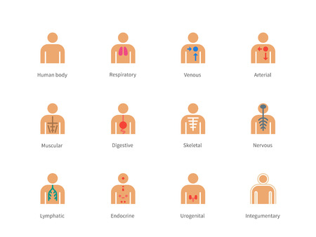 Pictogram collection of Human Body and Anatomy with lymphatic, integumentary, urogenital, endocrine, respiratory, nervous, skeletal, muscular, digestive, arterial and venous systems for Medical website and Applications. Flat color icons set. Isolated on w