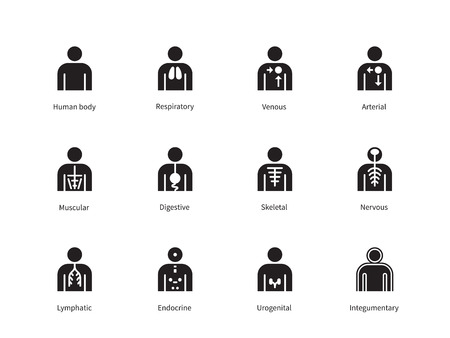 Human Body Systems icons on white background. Vector illustration. Vettoriali