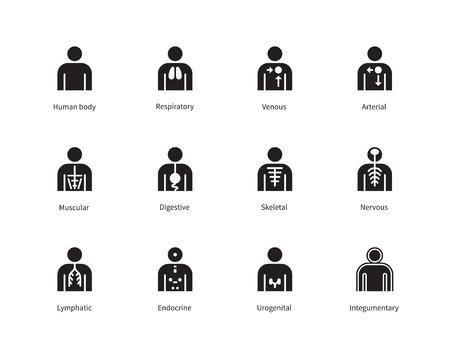 Sistemas del cuerpo humano iconos en el fondo blanco. Ilustración del vector.