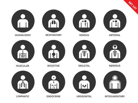 Human Anatomy and Body Systems vector icons set of lymphatic, integumentary, urogenital, endocrine, respiratory, nervous and others insignia. Isolated on white background Illustration