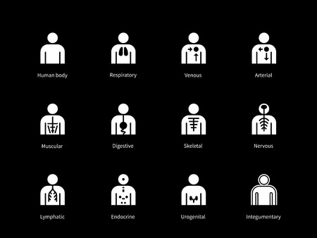venous: Systems of human body, digestive, arterial, venous systems icons on black background. Vector illustration.