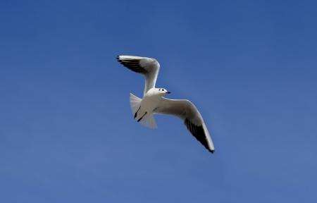 Flight of seagulls against blue the sky  Фото со стока