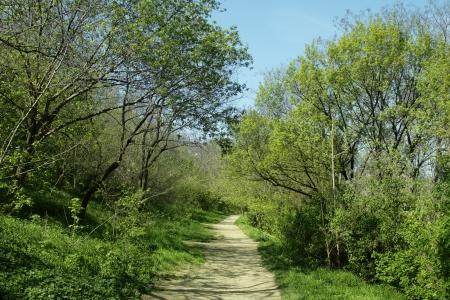 Pfad durch den Wald mit Holztreppen