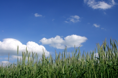 Beautiful farmlands with lovely clouds. Stock Photo - 16025248