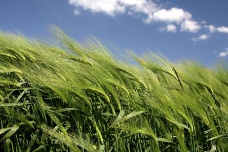 Güzel bulutlar Güzel tarım alanları.