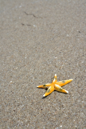 starfish on seacoast in a sunny day photo