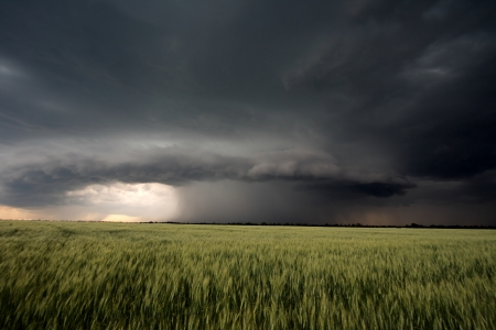 The beginning of summer hurricane over a green field Stock Photo - 16024553