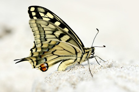The butterfly on sand close up