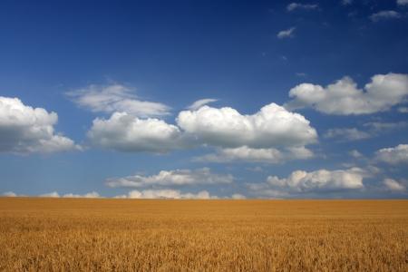 Harvesting Ansicht im Feld in einem sonnigen Tag Lizenzfreie Bilder