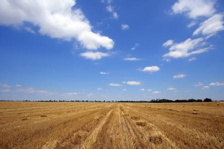 Wheaten Feld entfernt close up