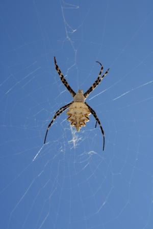 Spider close up hanging on a web Stock Photo - 16017471
