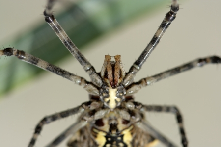 arachnoid: Spider close up hanging on a web Stock Photo