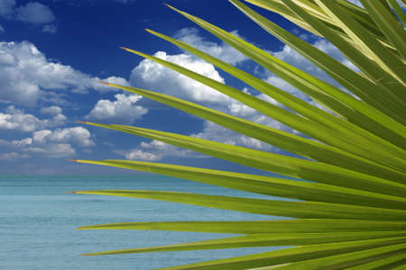 Leaves of a palm tree against the tropical sky photo