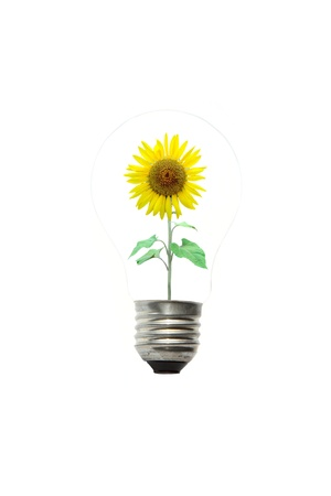 light bulb and sunflower in white background photo