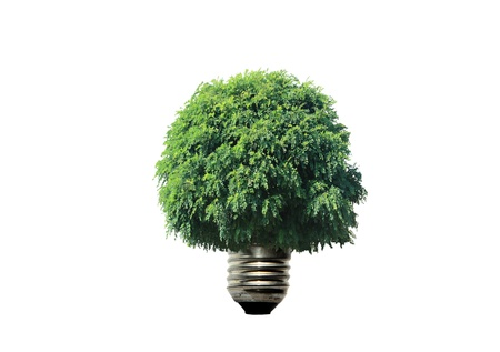 strom: light bulb and tree in white background