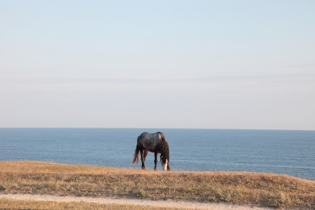 Wild steppe on cape Tarhankut in Crimea, Ukraine photo