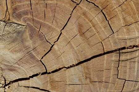 Tree rings are counted to determine the age of a tree photo