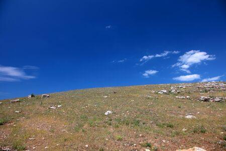 Wild steppe on cape Tarhankut in Crimea, Ukraine photo