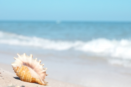 Beautiful seashell on the beach