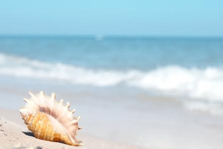 Sahilde güzel deniz kabuğu