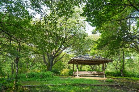arbor: Arbor of the Jindai botanical garden