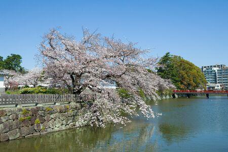 odawara: Spring Odawara Castle