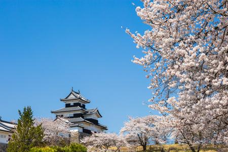 shirakawa: Shirakawa Komine Castle and cherry blossoms Editorial
