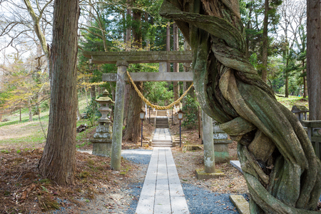 shirakawa: Shirakawa Shrine approach to a shrine
