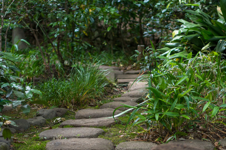 stepping on: Stepping stone of the garden