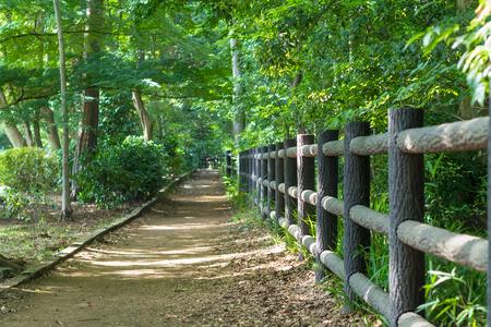 promenade: Promenade of the Inokashira park
