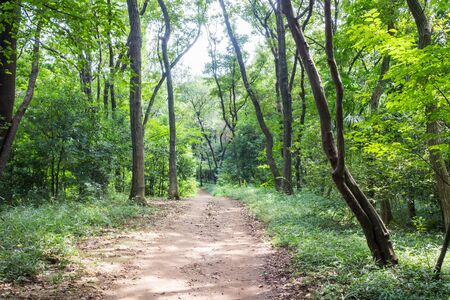 promenade: Promenade of Hachikokuyama green park